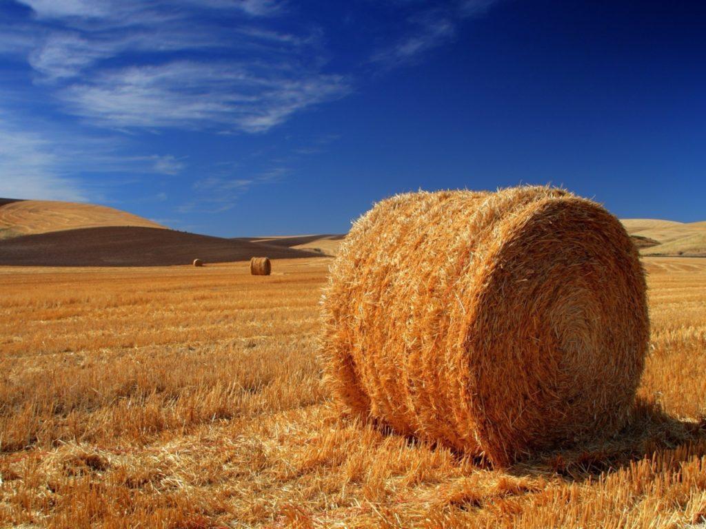 Bahan Jerami Untuk pakan ternak