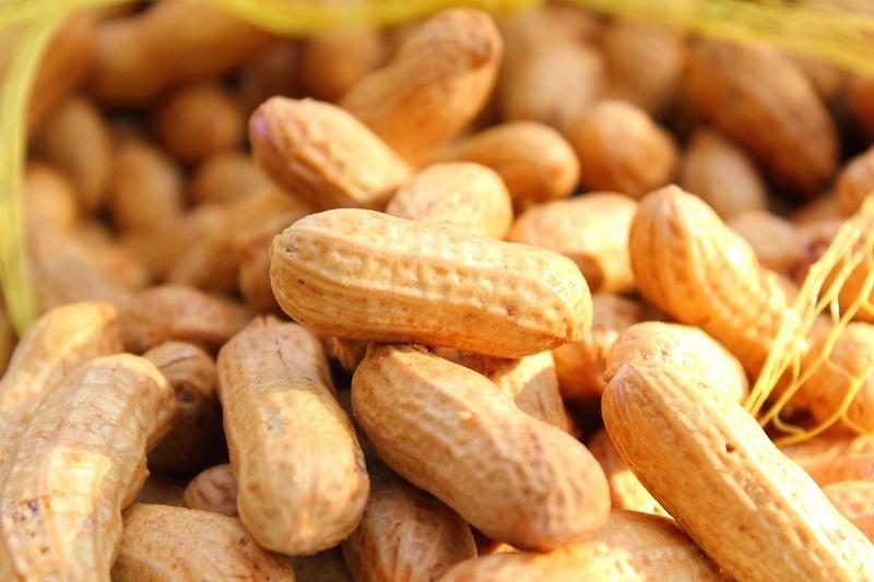 Cara Menanam Kacang Tanah Yang Mudah Dilakukan