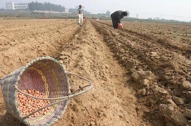 Pengelolaan Tanah Secara Organik