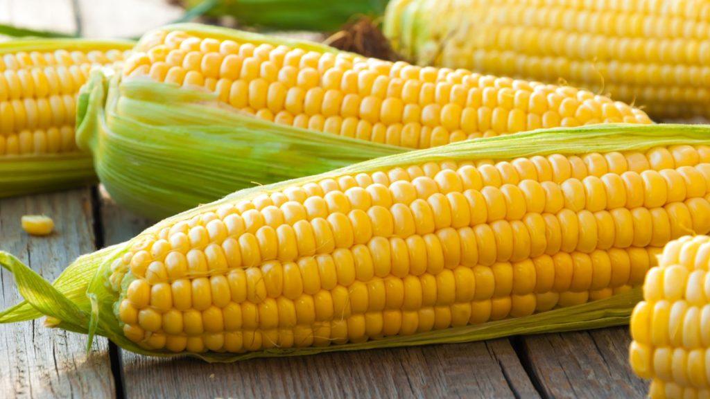 cara membuat puding jagung