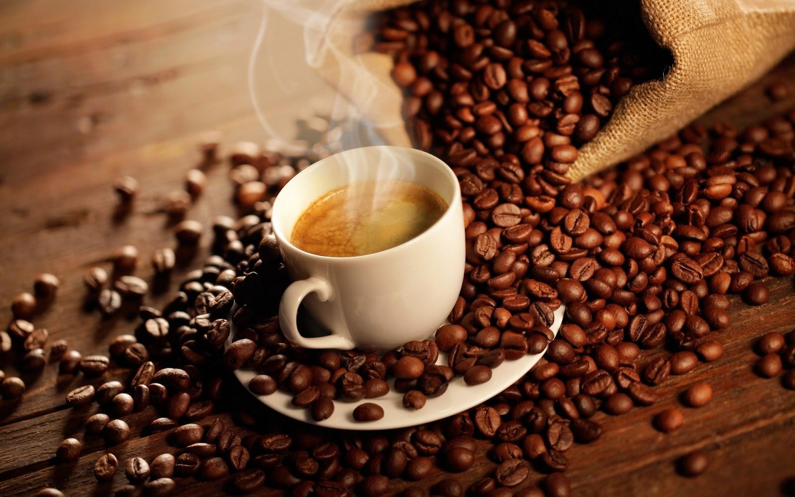 cara mebuat kopi luwak