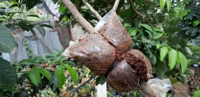 Sabut kelapa untuk tanaman
